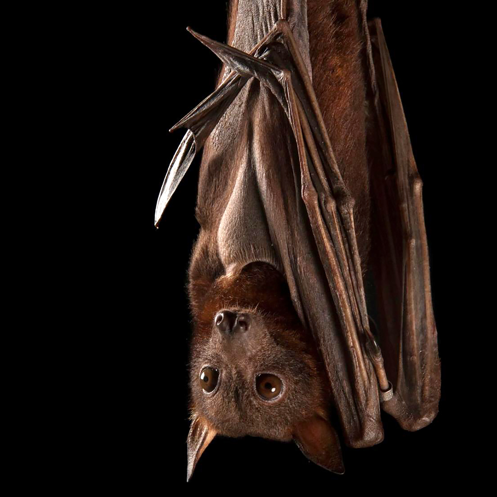 Beautiful Bats