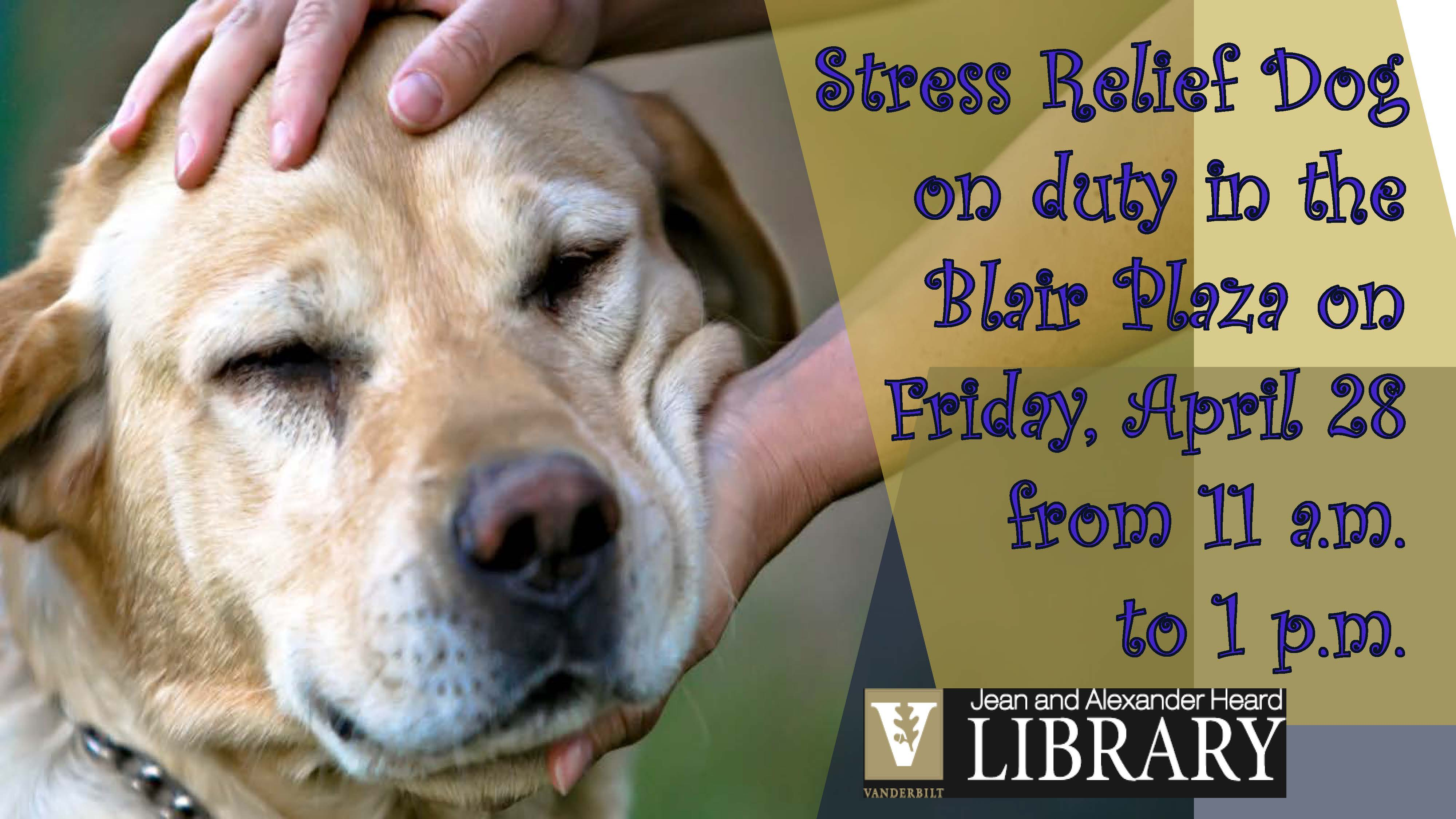 Stress Relief Dog On Duty!