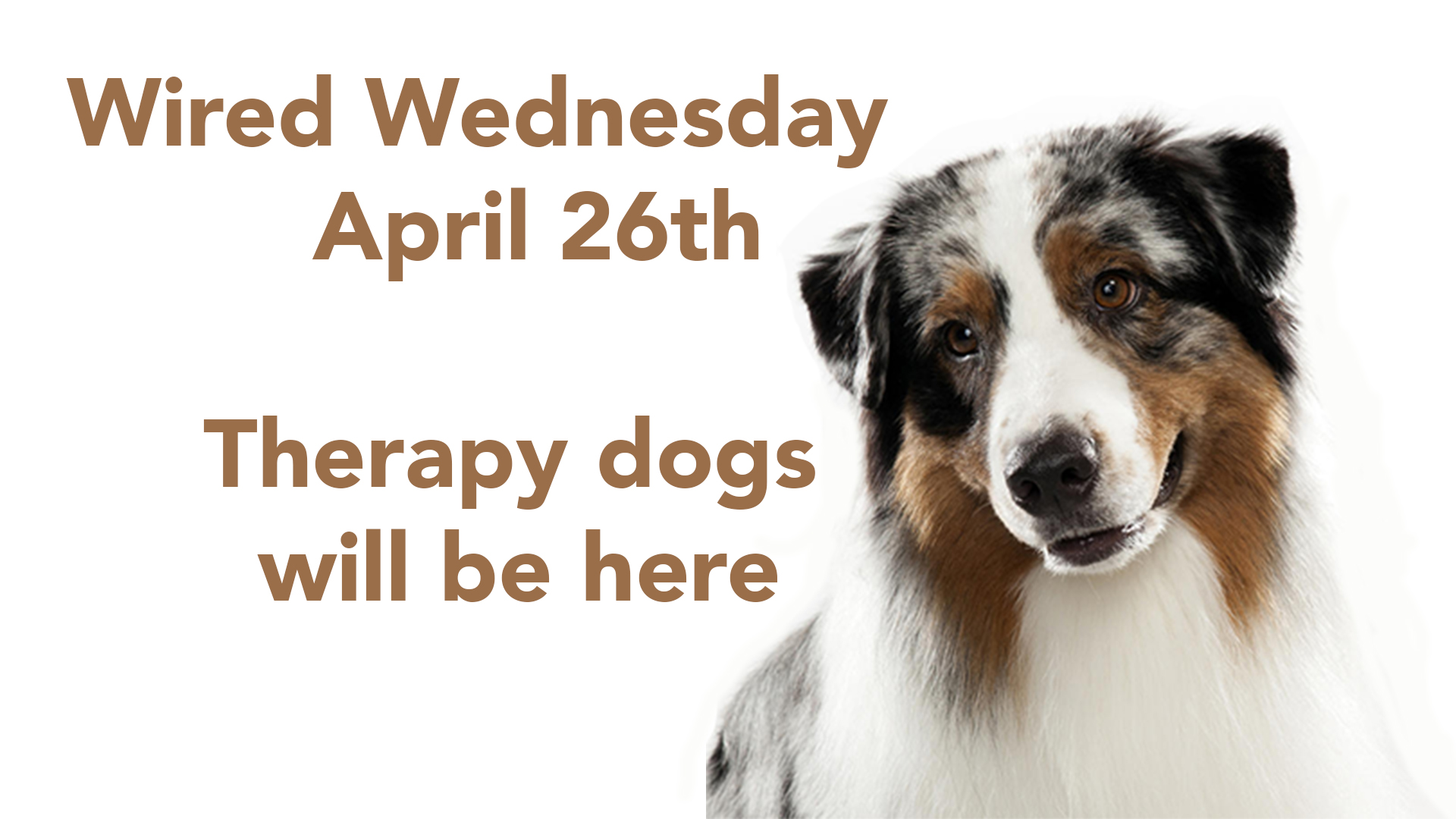 Therapy Dogs will be back at Wired Wednesday, April 26th