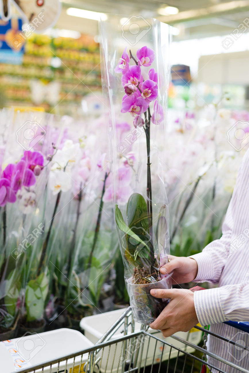 Cancelled! Master Gardeners:  Supermarket Orchids Survival Class