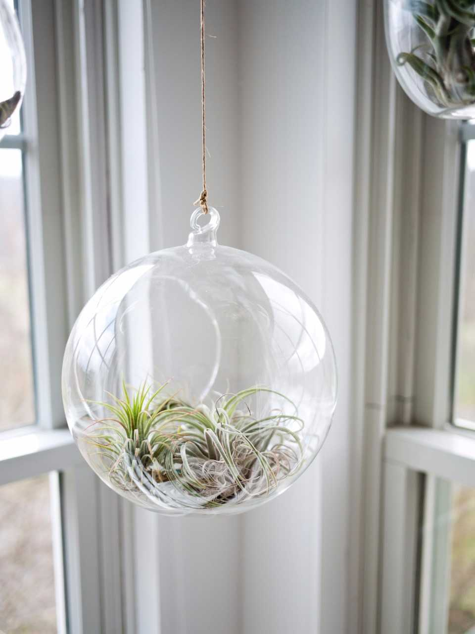 Create an Air Plant Terrarium with Prismatic Garderns