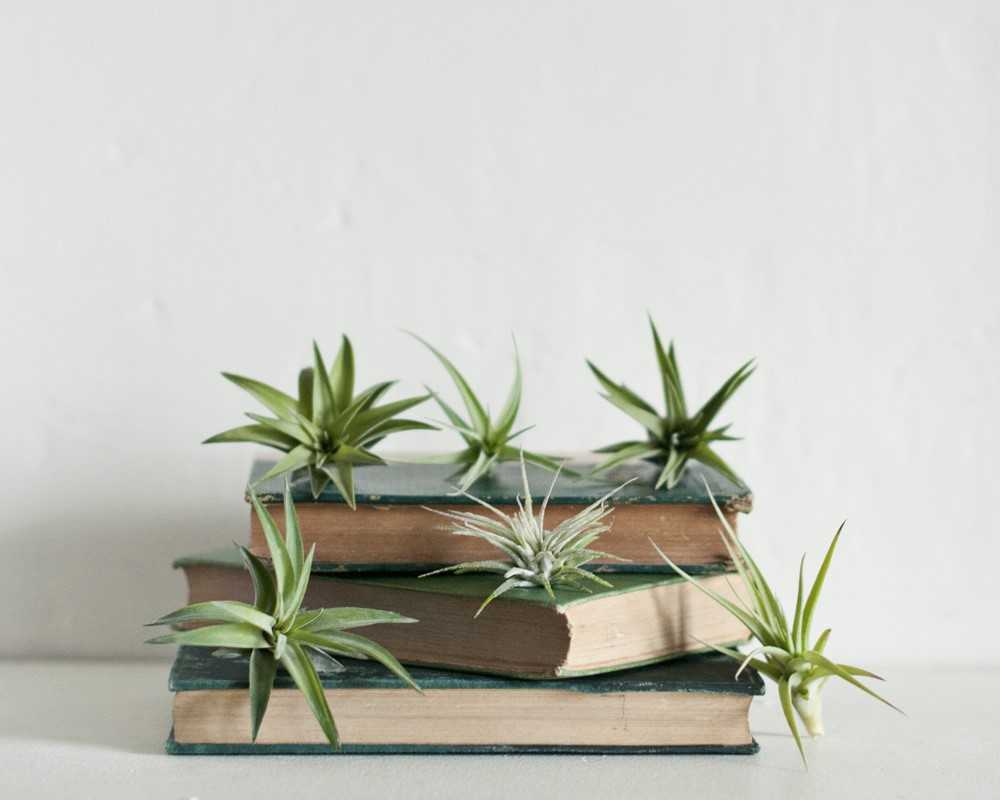 Date Night: Create an Air Plant Terrarium with Prismatic Gardens