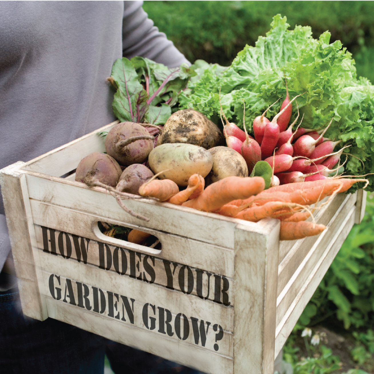 How does your Garden Grow? Container Gardening