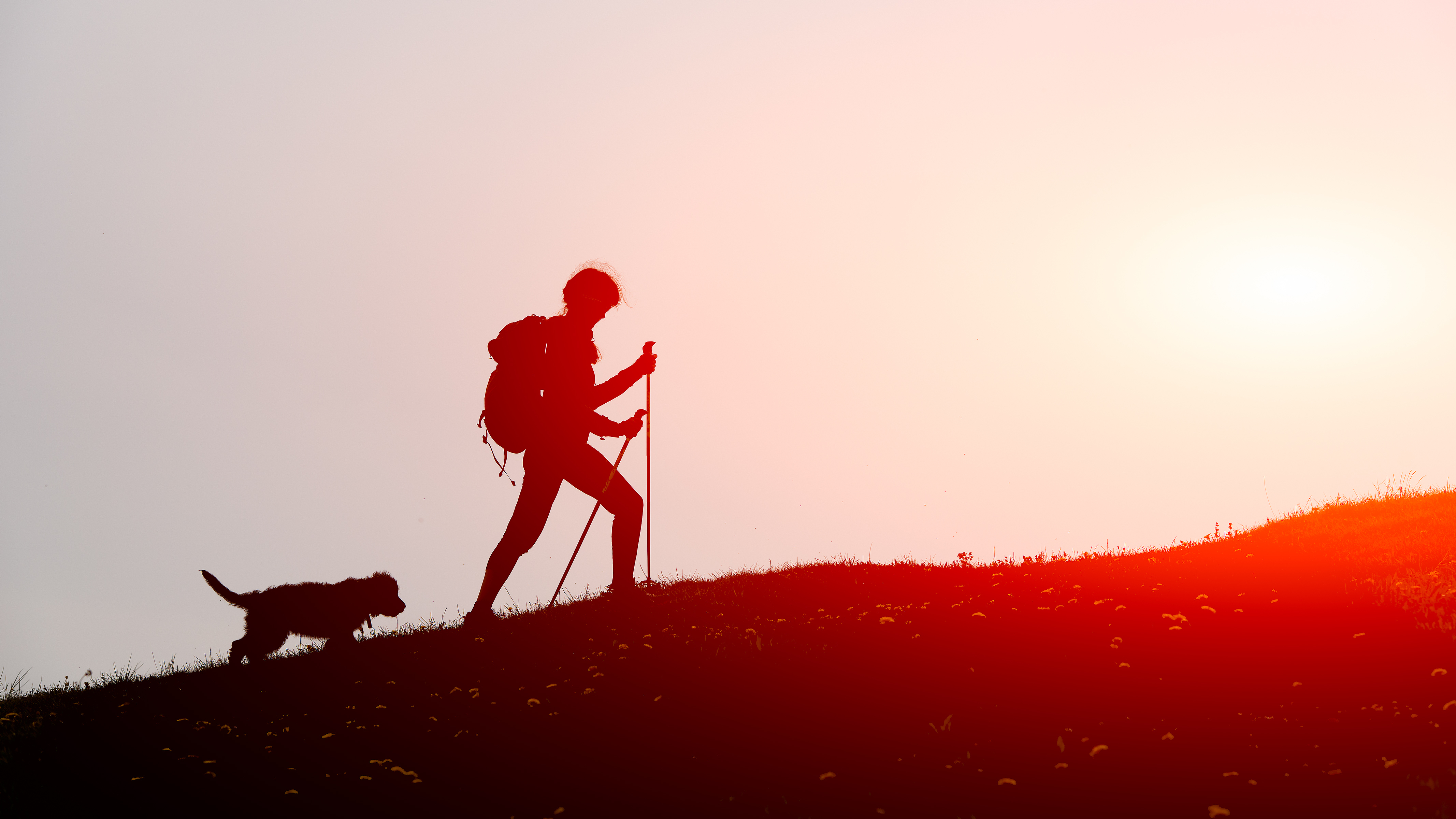 CANCELED - Hiking and Walking Safely with Your Dog