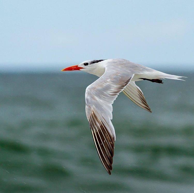 ecoExplore Skill Session - Bird Banding and Tracking