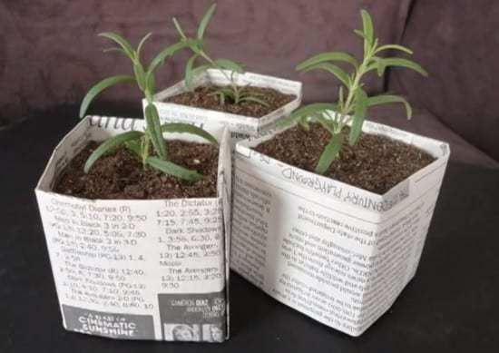 Saturday STEAM: Recycled Paper Planter