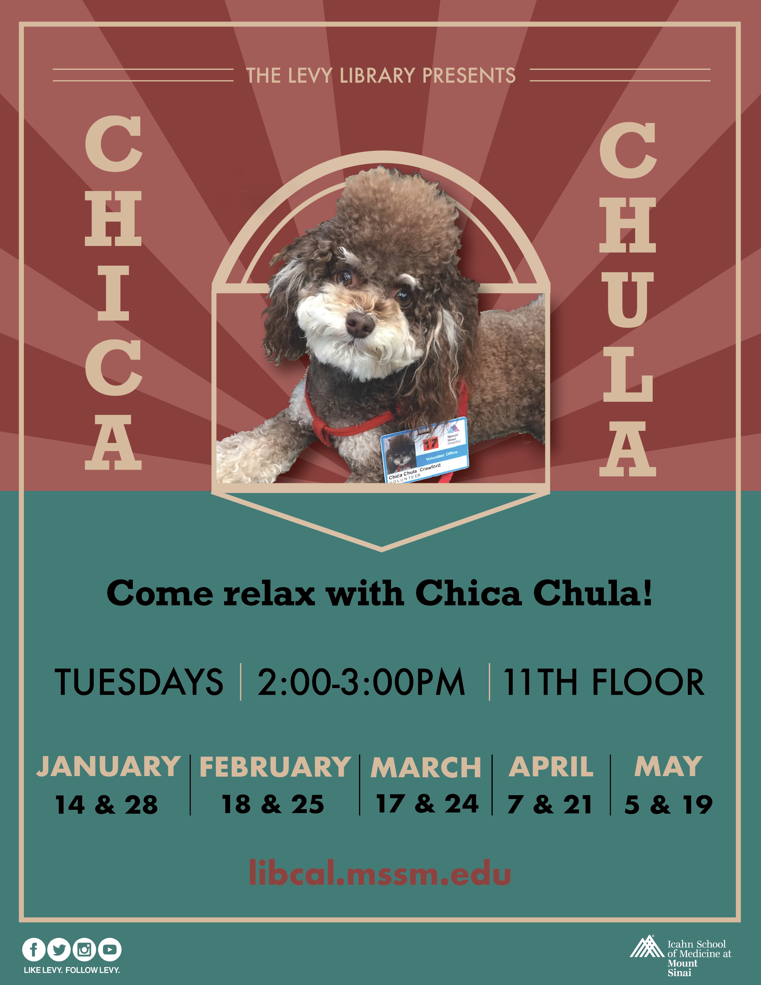 Chica Chula Therapy Dog