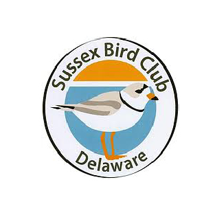 The Sussex Bird Club | Purple Martins