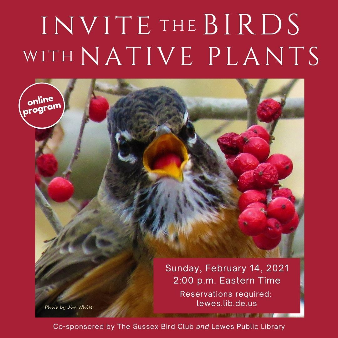 Sussex Bird Club | Invite the Birds with Native Plants