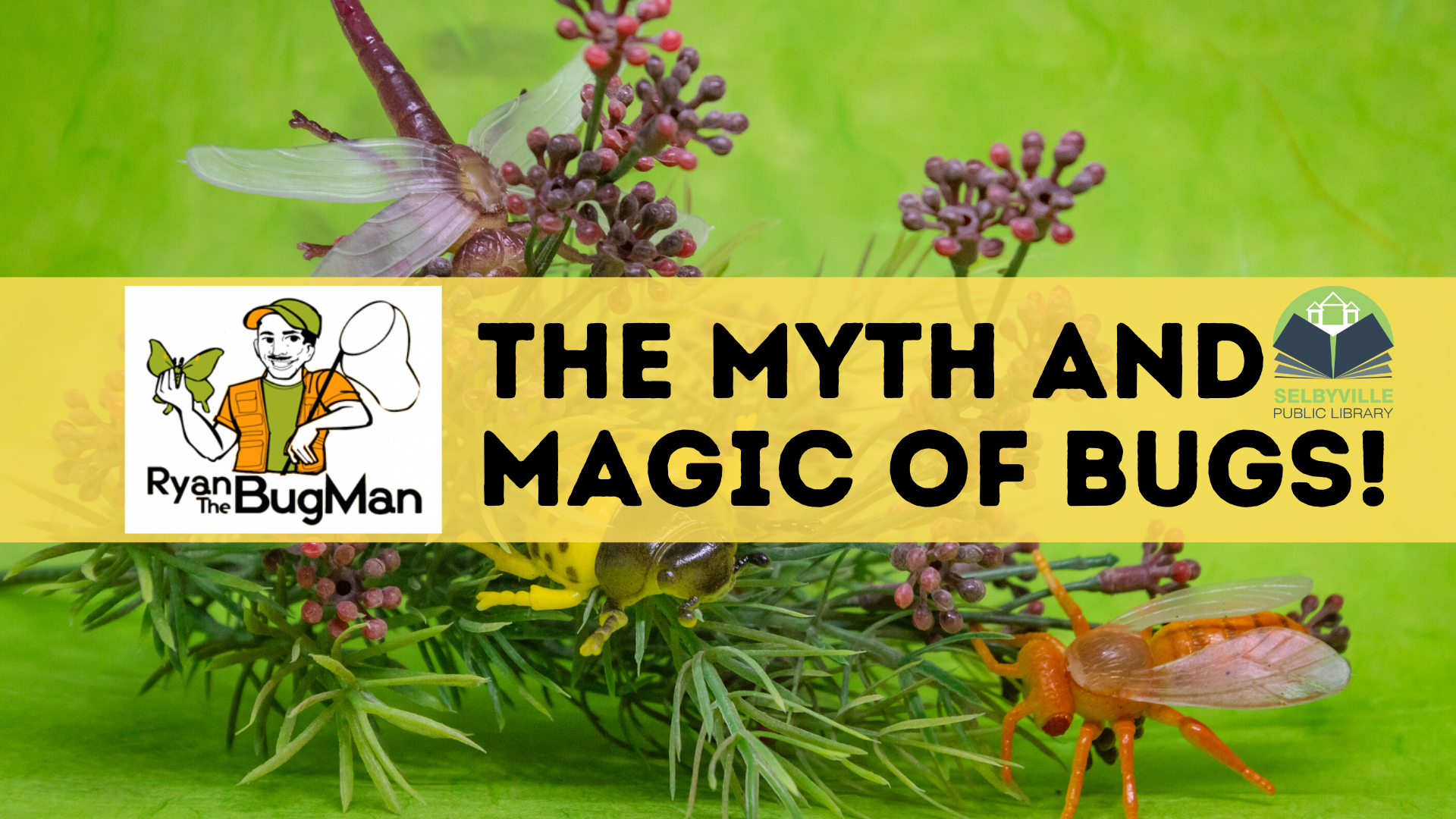 BugMan - The Myth & Magic of Insects