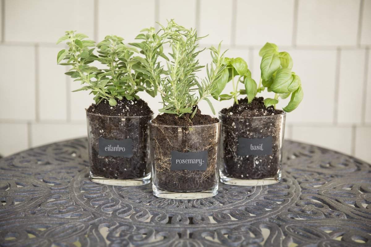 DIY - Herb Planter with the Dover Public Library