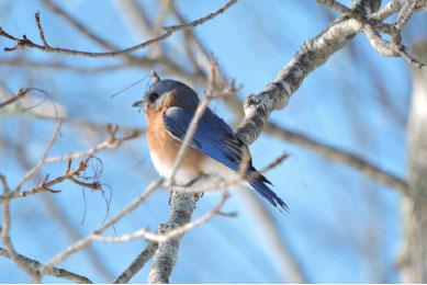 Birds of New Hampshire - Dr. Steve Hale