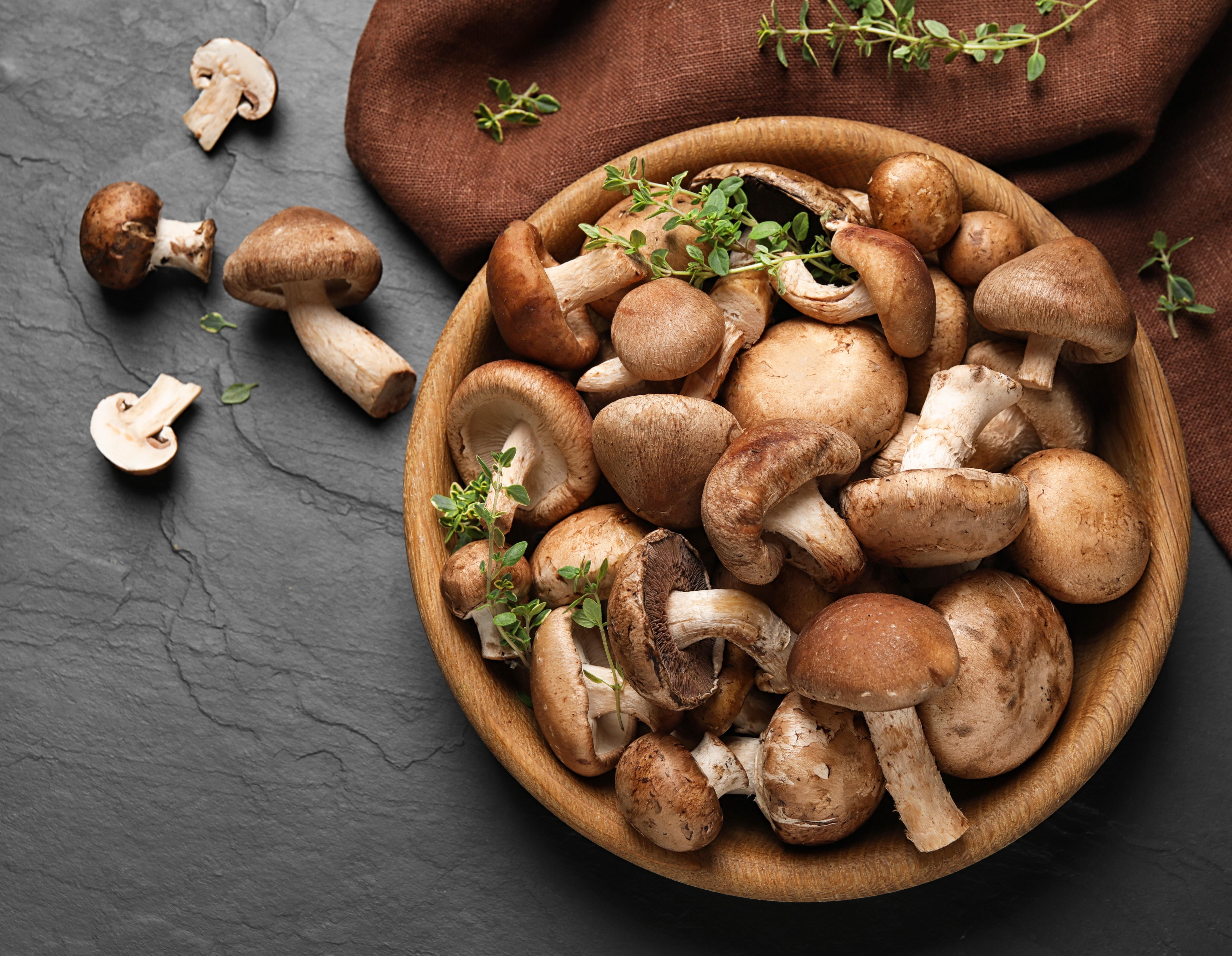 Edible Wild Plants and Mushrooms
