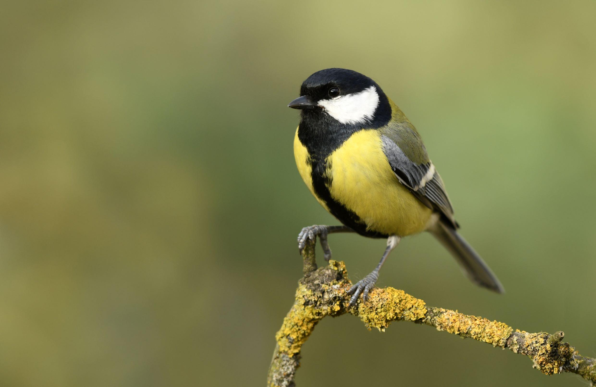 Bird Watching Walk in Benson Park