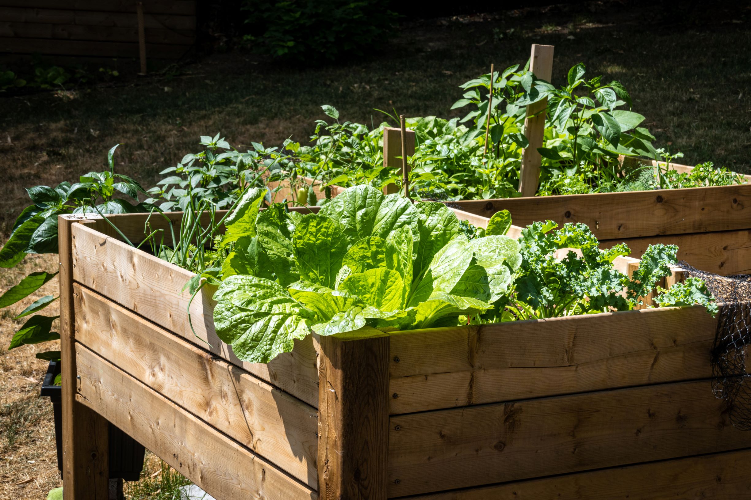 No-Till Gardening: Easy/Low Labor Methods for Starting a Garden From Scratch