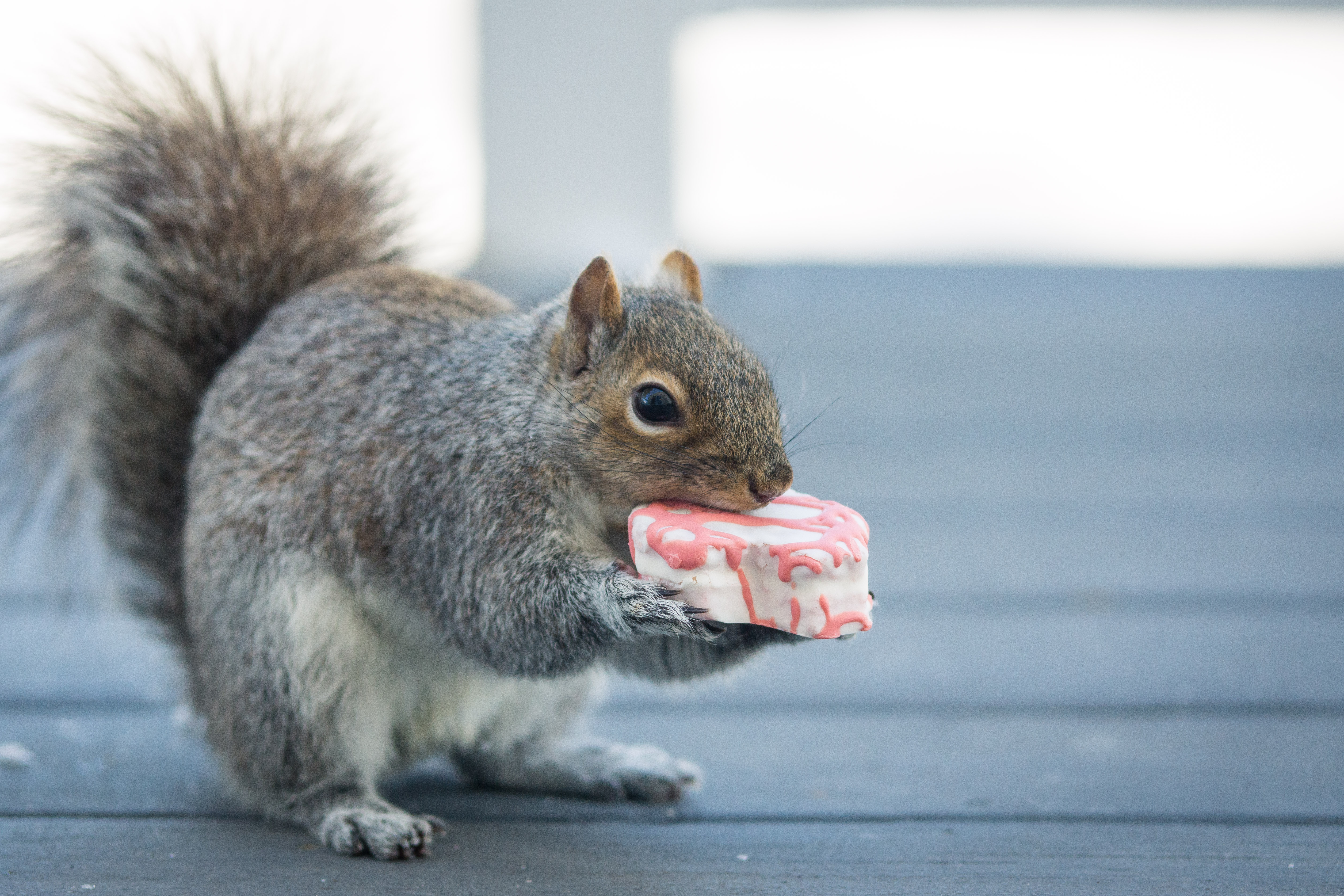 Virtual Snack Attack - SRP