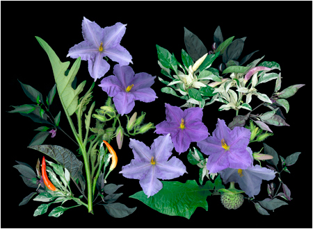 An Introduction to Floral Scanner Photography