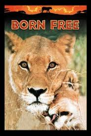 Movie Matinee: Born Free