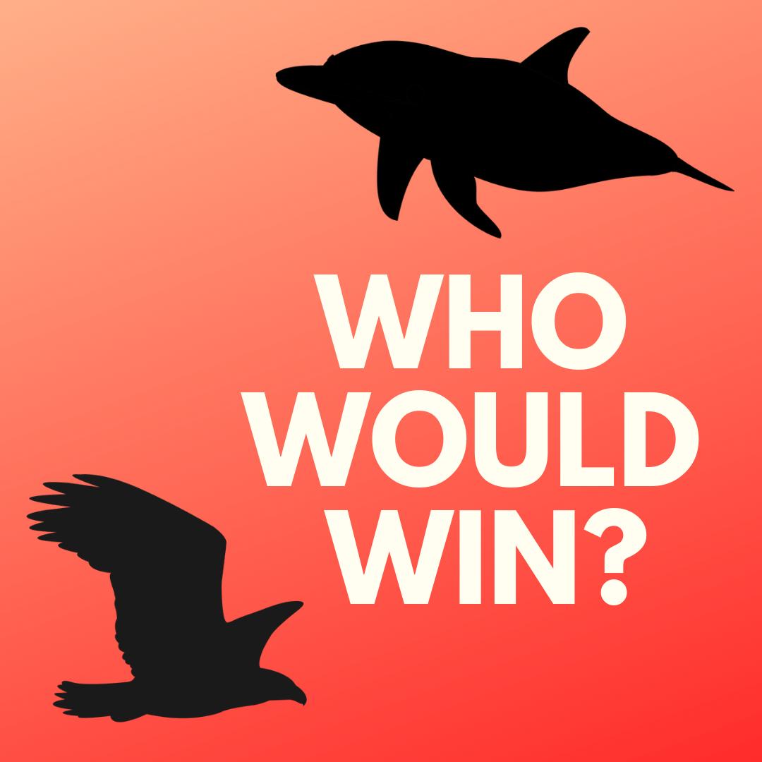 Who Would Win? Coyote vs. Bobcat (Grades K-3)