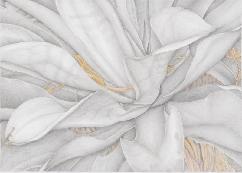 Silverpoint Drawing Demonstration & Discussion