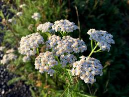 What to Grow in My Medicinal Herb Garden?