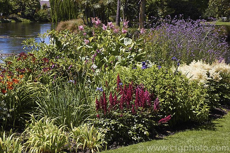 Designing a Sunny Perennial Border