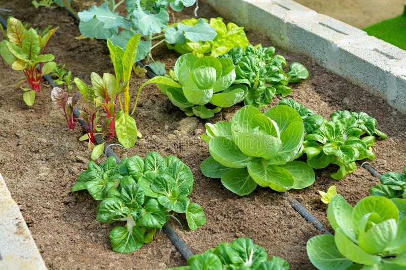How to Have a Successful Vegetable Garden