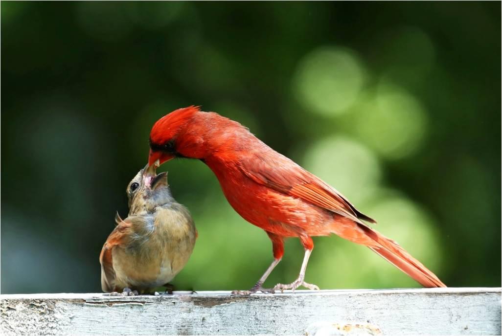 Birdscaping: Home Sweet Habitat