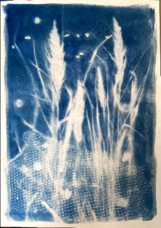 Cheshire Art League Floral Cyanotype Zoom Demo