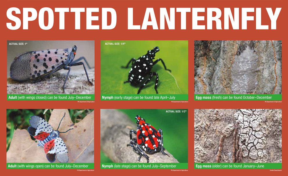 Postponed: More info to come Spotted Lanternfly Program