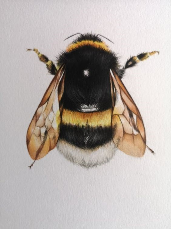 Activities in the Morning:  Colored Pencil Bee Tutorial