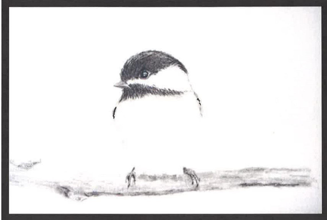 Learn to Draw A Winter Bird with Anita Thompson