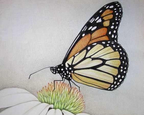 Butterfly and Flower Colored Pencil Drawing