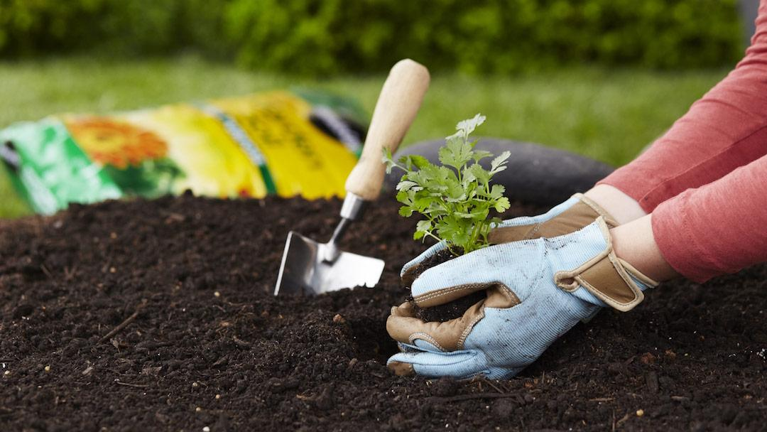 Little Master Gardener