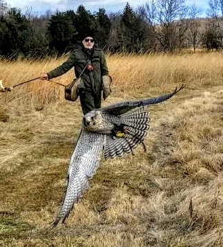 Falconry with Master Falconer Tom Stanton