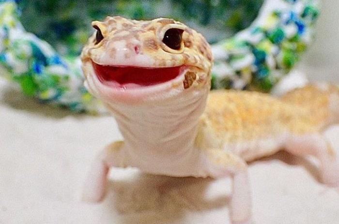 Churchville Nature Center: Reptile Smiles