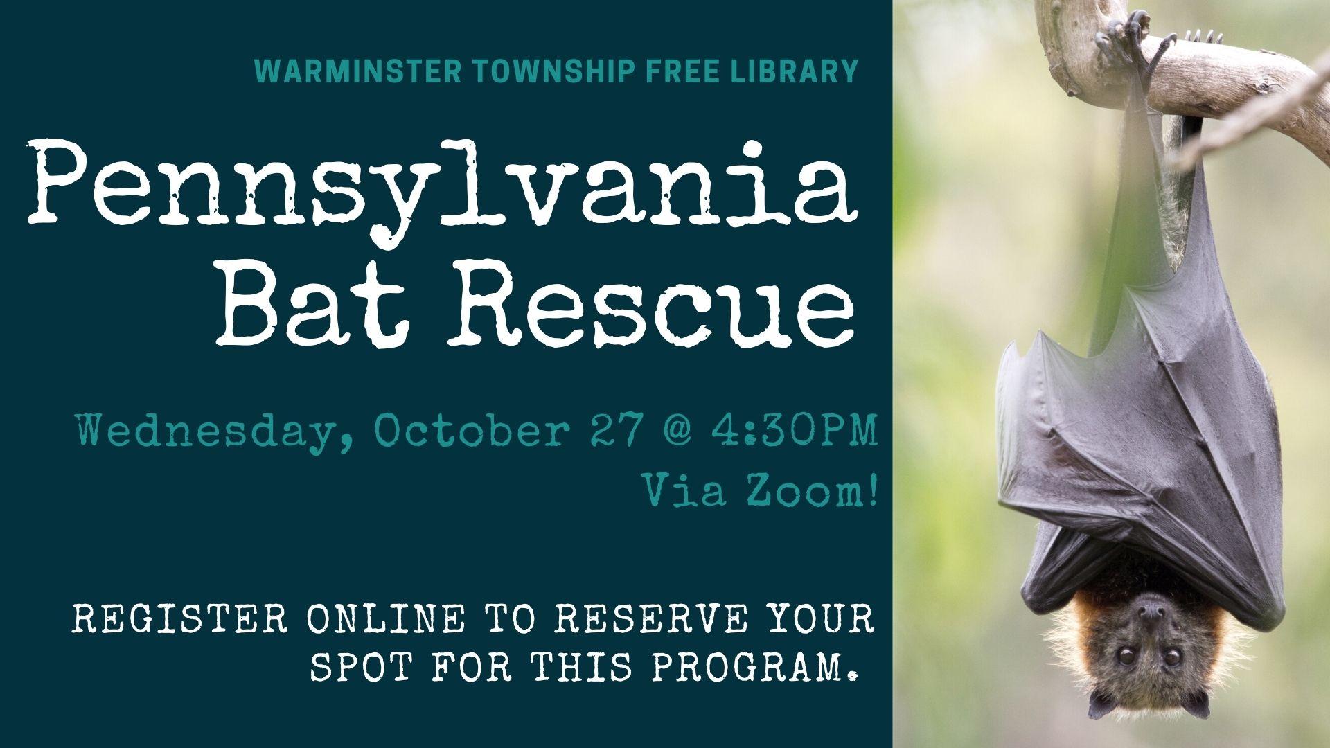 Pennsylvania Bat Rescue
