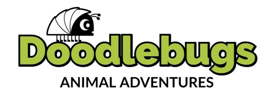 SOLD OUT Doodlebugs Animal Adventures