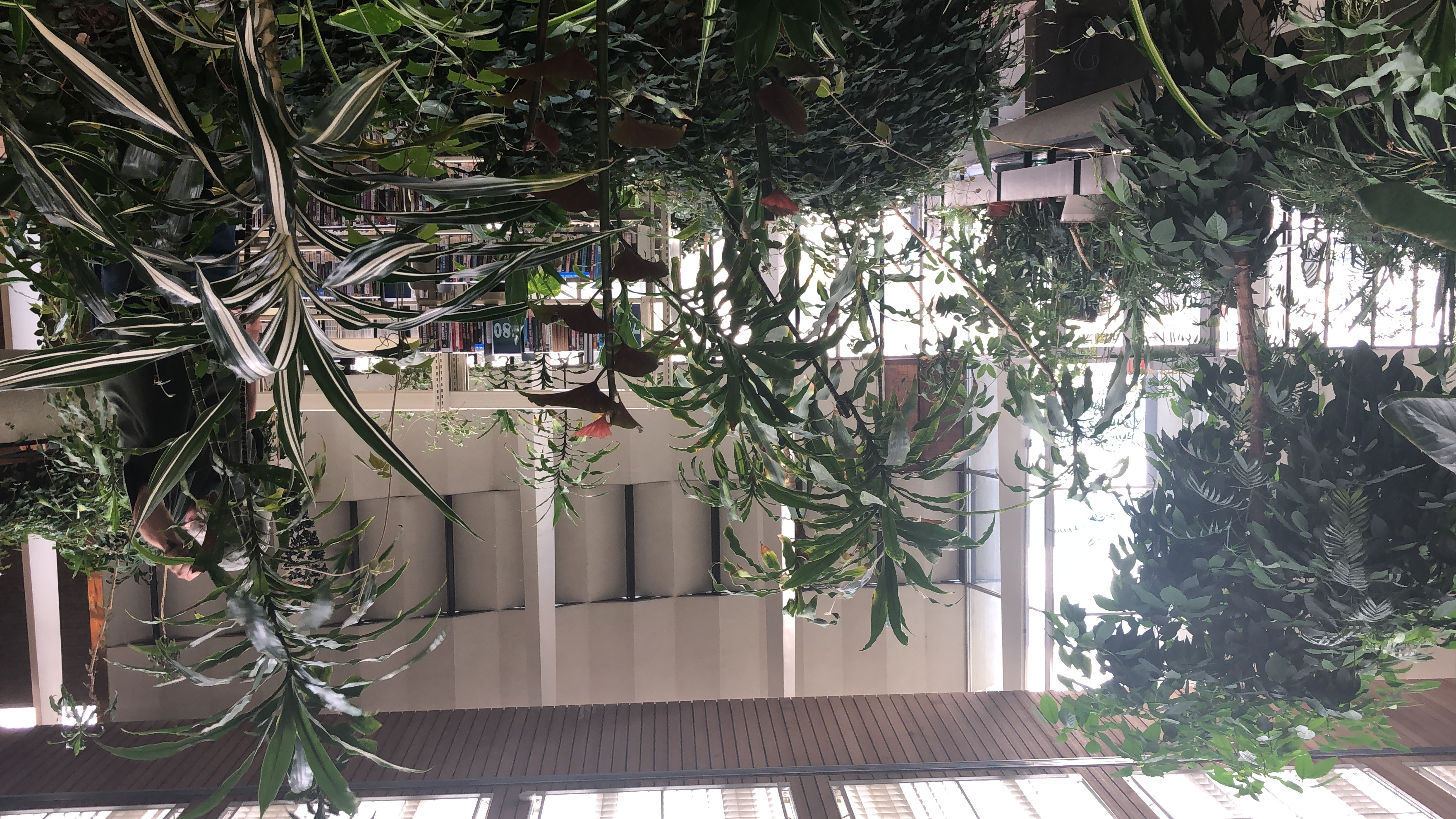 Get to Know your Branch: Downtown Reno Library Gardens