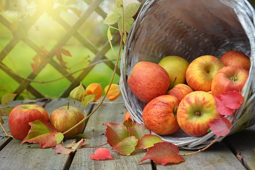 STEAM: Absorbing Leaves and Fizzy Apples