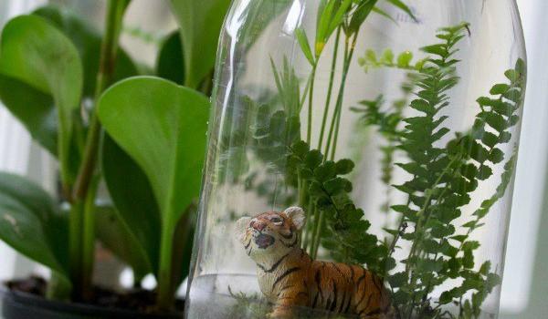 STEAM Thursdays - Rain Forest In a Bottle