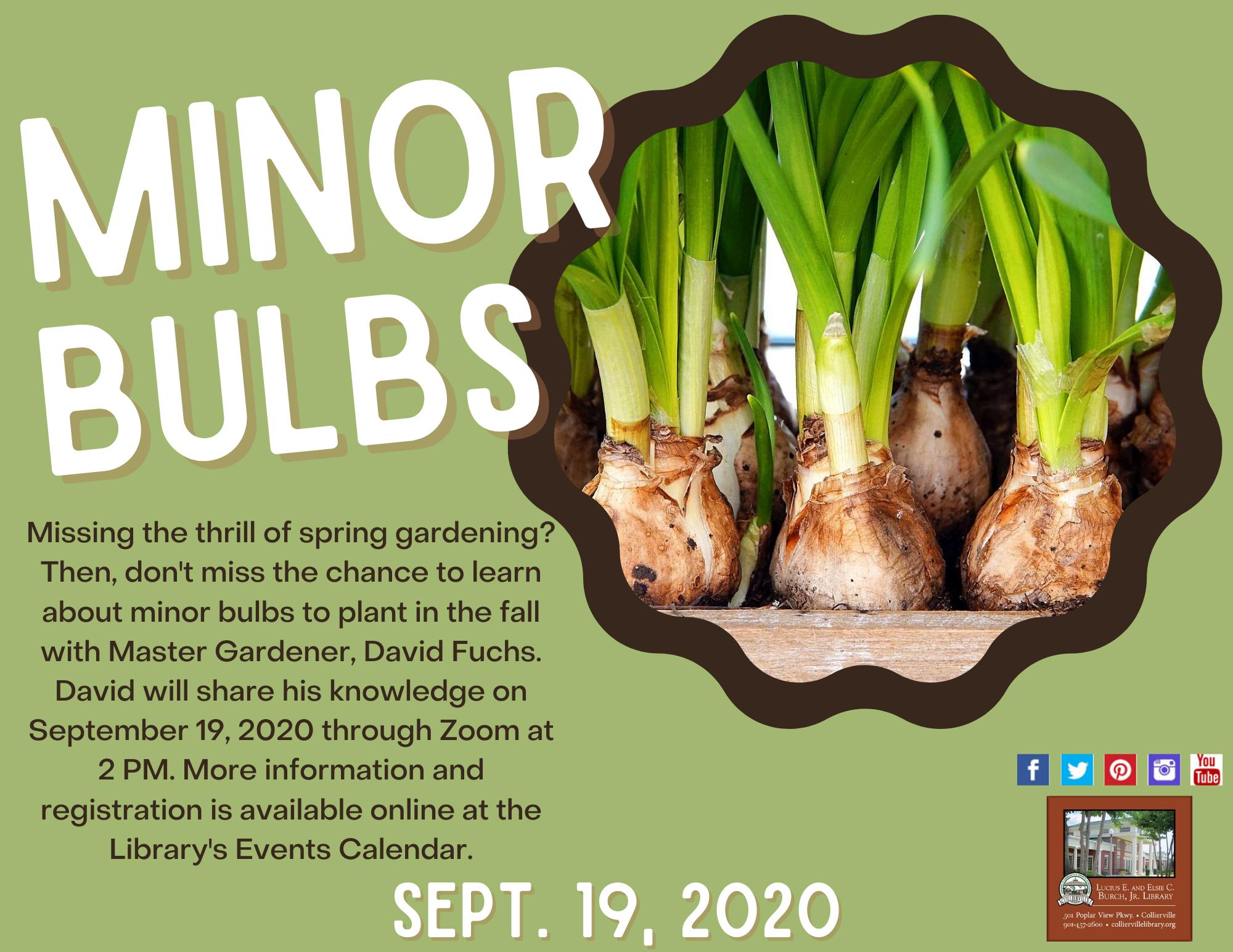 Minor Bulbs with Master Gardener, David Fuchs