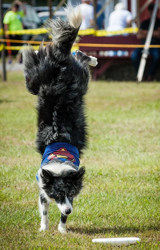 Flying High Dog Show
