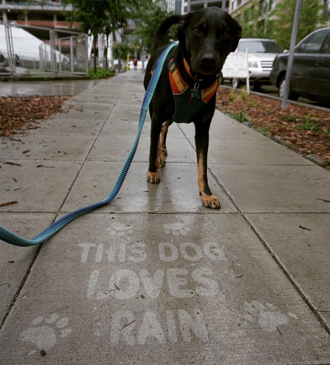 Raining Cats & Dogs: Outdoor Art