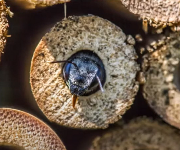 BeeChicas: Native Bees and Their Habitats