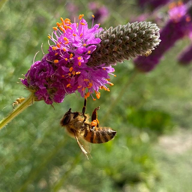 BeeChicas: Gardening for Birds and Bees!