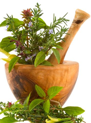 Summer of Discovery: Herbal Nutrition