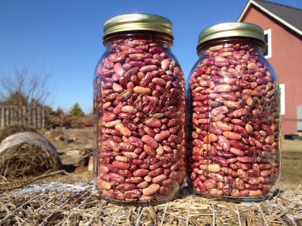 Seed Extravaganza: Native Plants, Vegetables, and Flowers