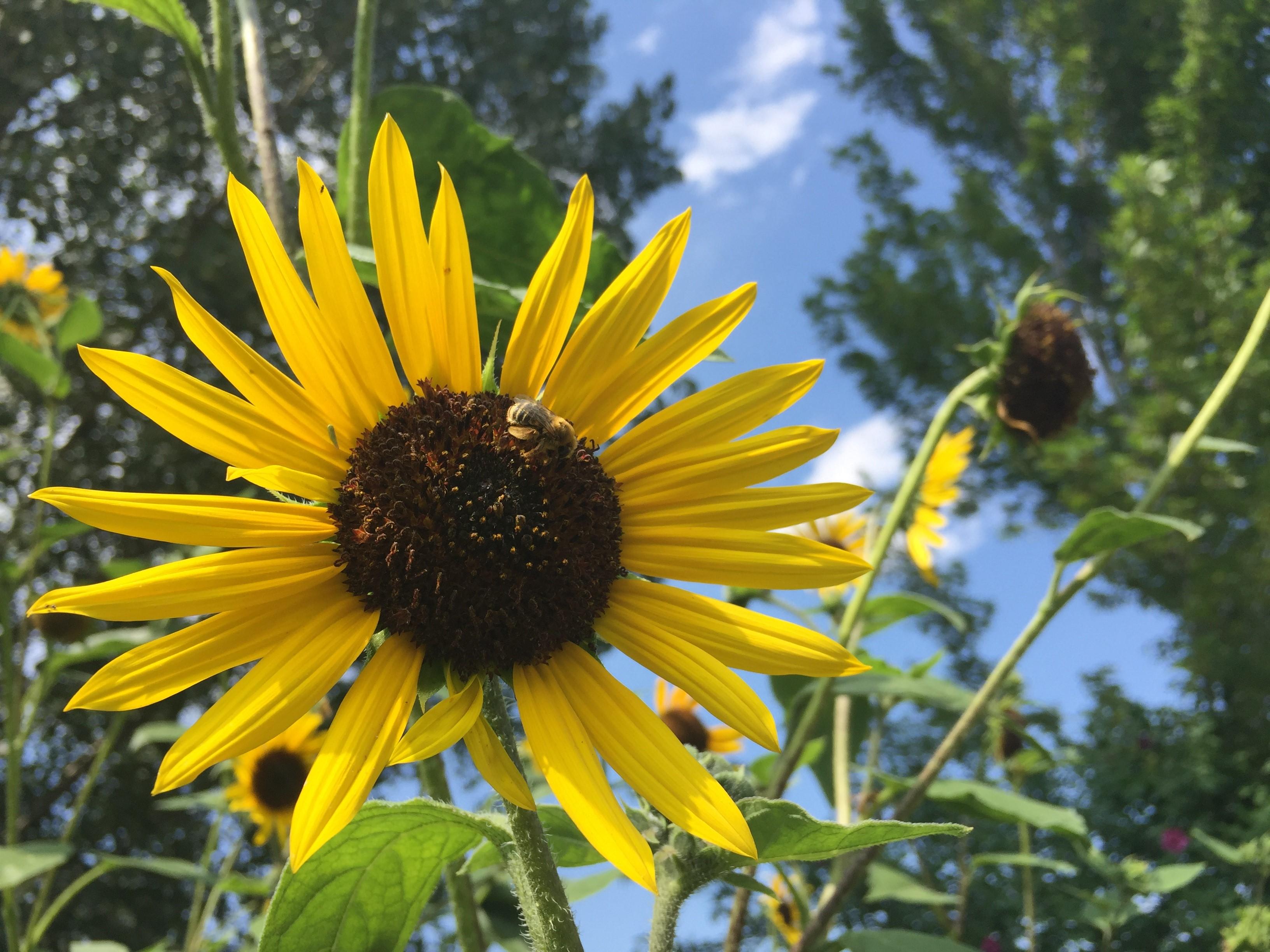 Garden Work Hour: Master Gardener Seed Q&A
