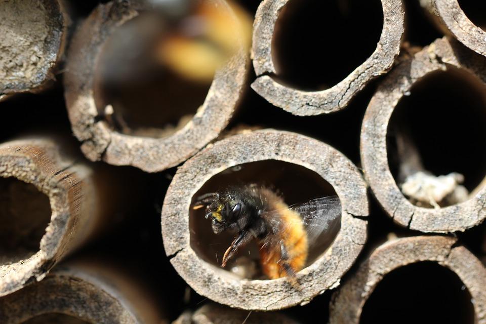 Pollinator Appreciation: DIY Bee Hotels